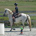 Jeux équestres manchots 2013 (293)