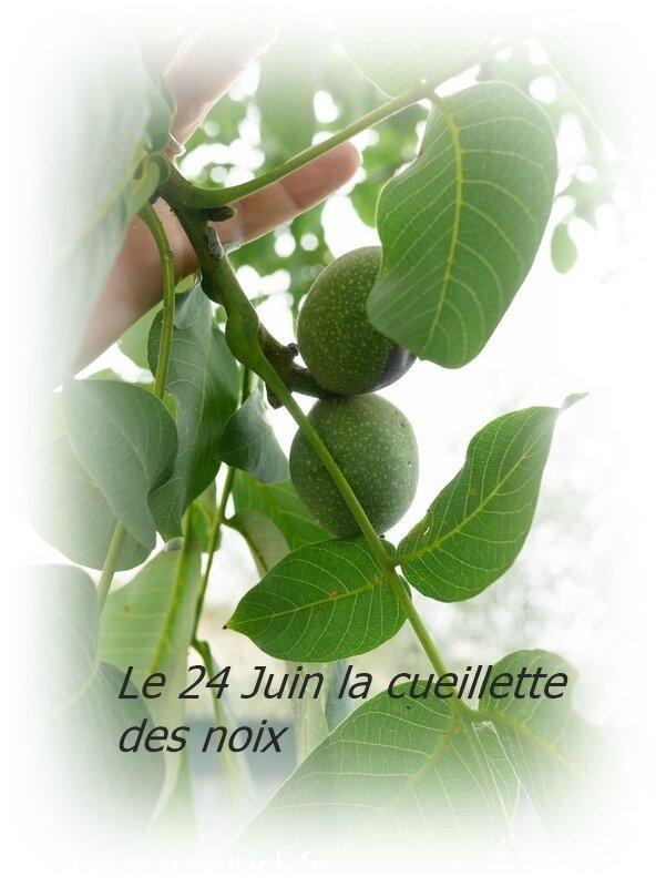 noix-vertes-pour-vin-de-noix-2