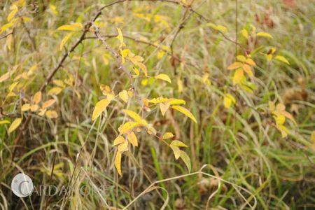 automne05
