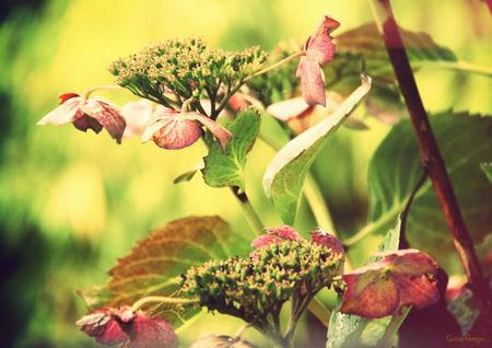 automne1_4