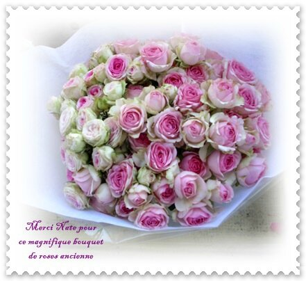 fleurs nate 004 BLOG