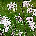 Lever de soleil et Fleurs de Léon 110318