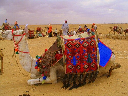Colourful Camel