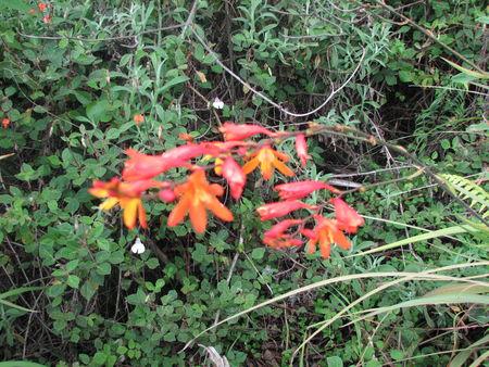 nyiragongo_mont_e_au_volcan_orchid_es___coul_es_de_2002_00_