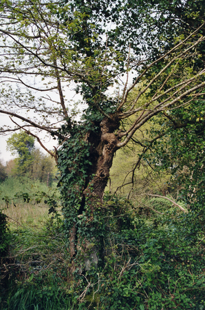 Broceliande_Arbre_1