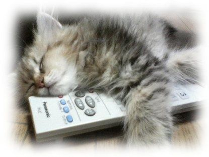 321_tired_cat_1_