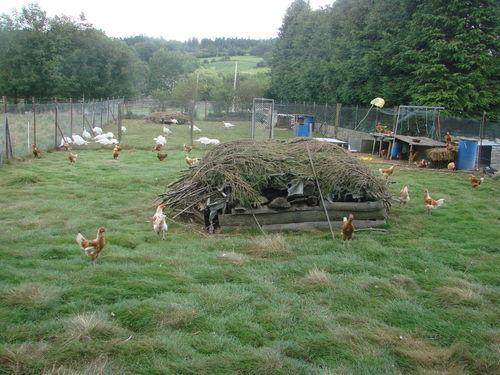 2008 08 25 Les volailles
