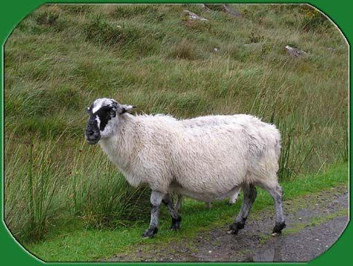 La course au mouton sauvage 羊をめぐる冒険 , et danse danse