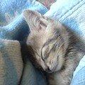En plein sommeil