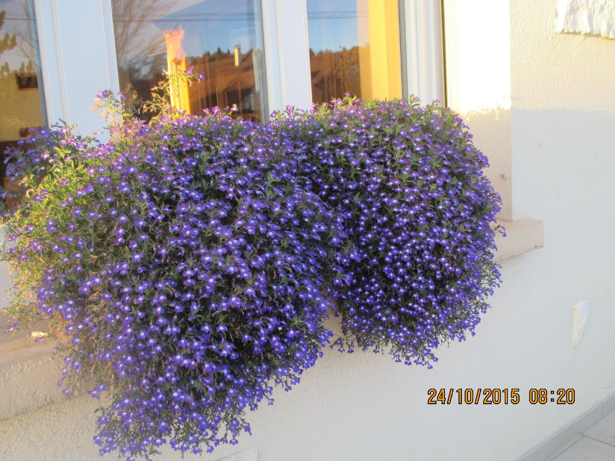 voici un aperçut de mes fleurs.. bon dimanche à vous,grosses bises♥