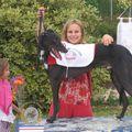 Male lévrier greyhound geldrops spark