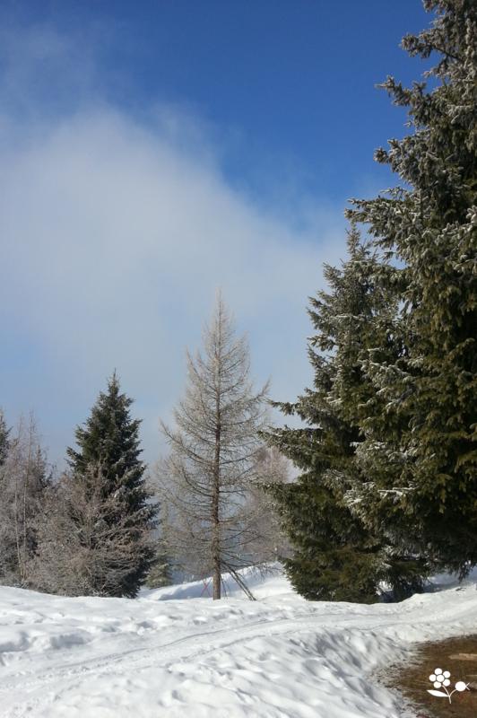Forêt par beau temps