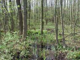 blackswamp2