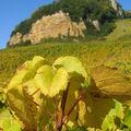 Vignes & Chateau Chalon sur rocher (2)
