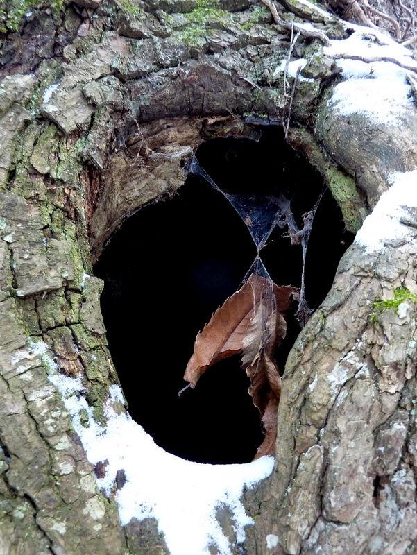 tronc troué abandonné