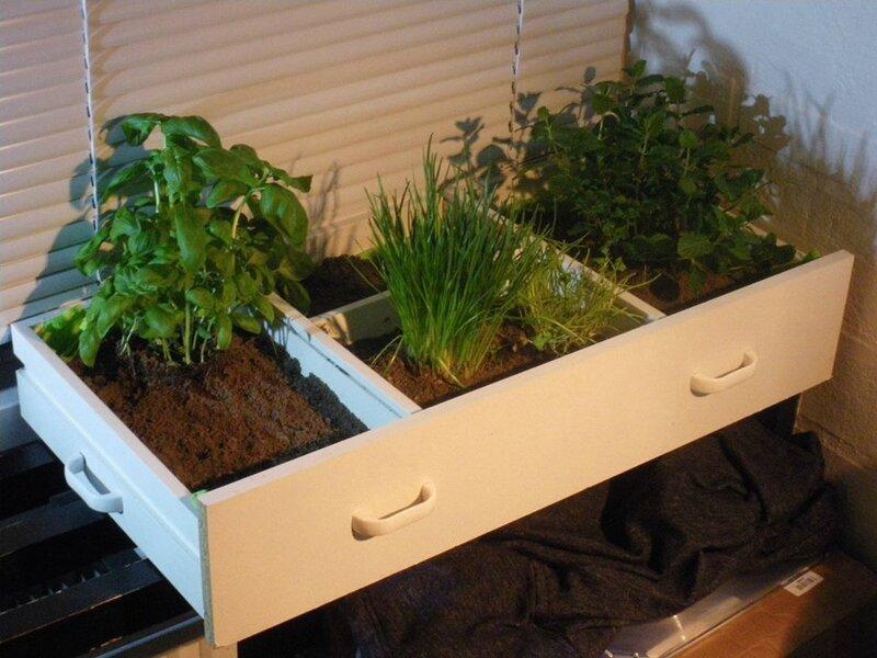 tiroir plantes