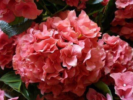 lmdp fleurs artificielles