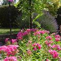 Jardin d'été en mauve et rose !