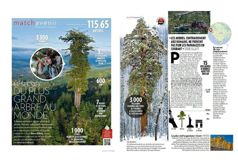 arbre-PMAT_2016
