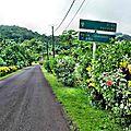 RAIATEA 16 - Route cote est