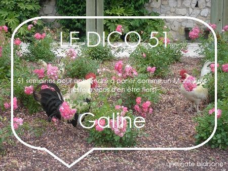 le_dico_51_galine