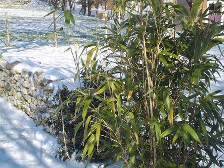 neige_2_016