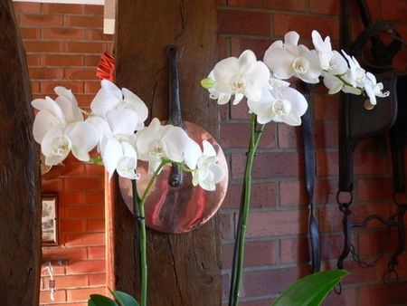 orchid_e_an