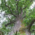 Mystères d'arbres 42