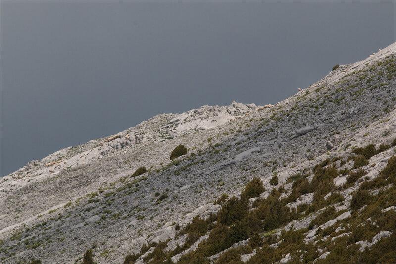Haut Aragon juin 2017 J2 Castillo 97 moutons lapias
