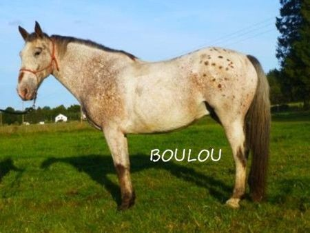 Boulou_b