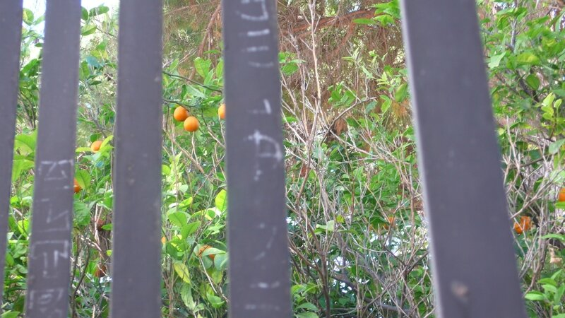 CAGLIARI vue du jardin derrière église orthodoxe
