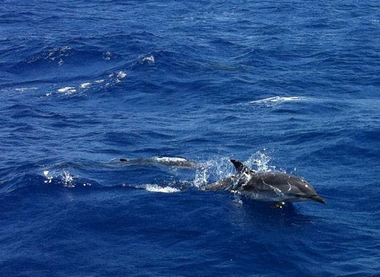 dauphins_2