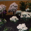 Floralies 084