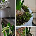 Un pot de jacinthe ...