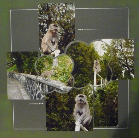 Macaque_en_libert_