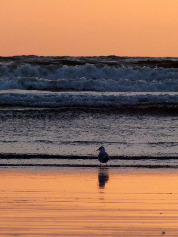 plage-sainte-anne-la-palud-finistere-baie-douarnenez-bretagne-atlantique-vagues-pipit-char-a-voile-coucher-soleil-mouettes (6)