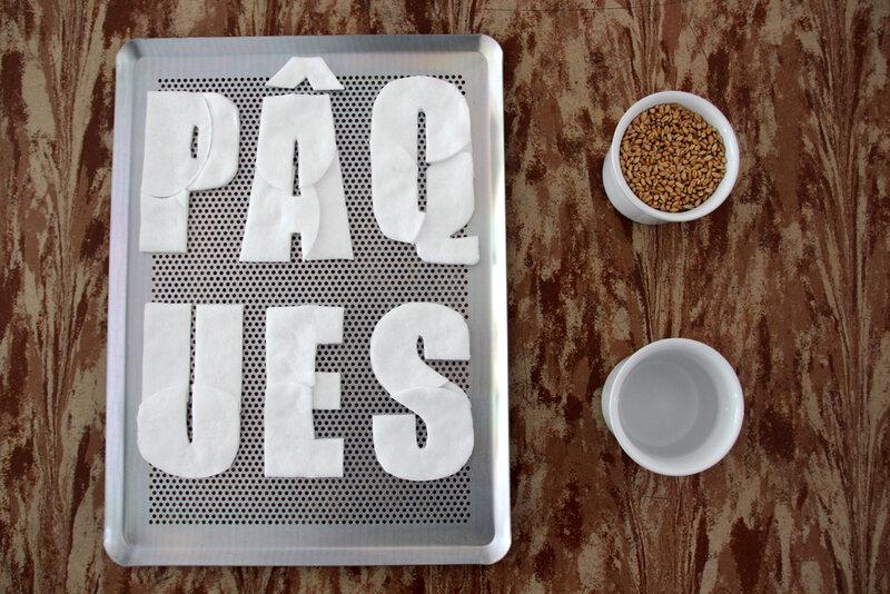 DIY_paques_graines