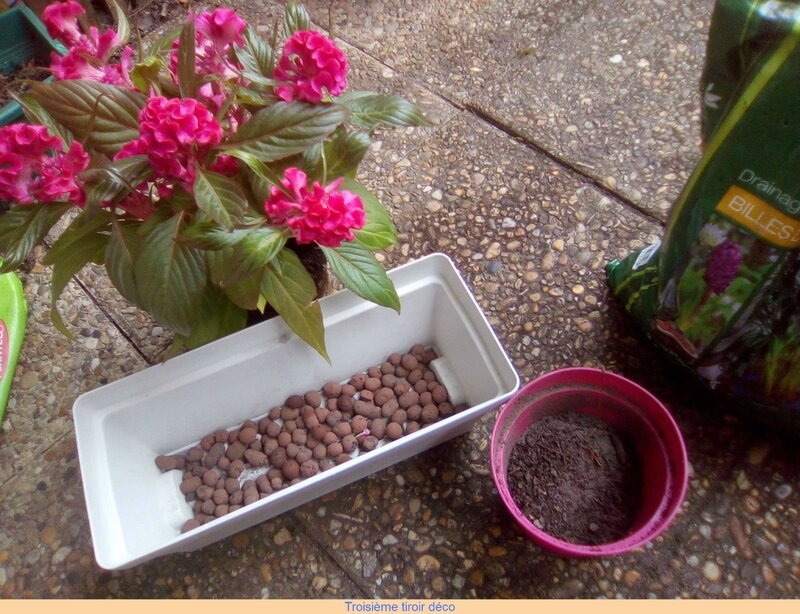 plantation jardiniere
