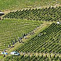 Beaujolais-vendanges-2014-7915-442x421