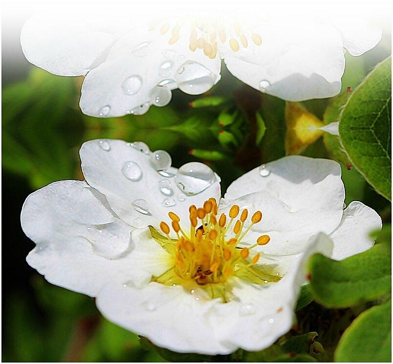 La pluie du matin, n'arrête pas le pèlerin.......La nature en images...