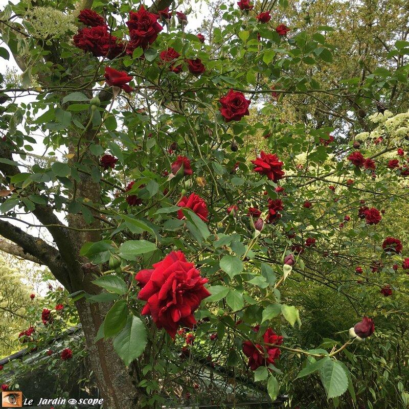 2633-Red-Parfum