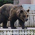 Mulhouse : mort de la doyenne des ours bruns captifs européens
