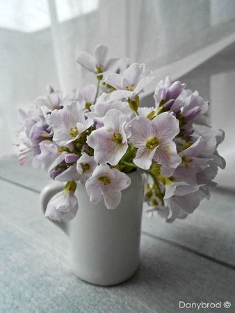 fleurs carla2