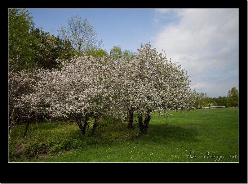 IMG_7149-naturelimages