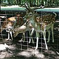 Un petit tour par la forêt de chailluz et son parc à animaux