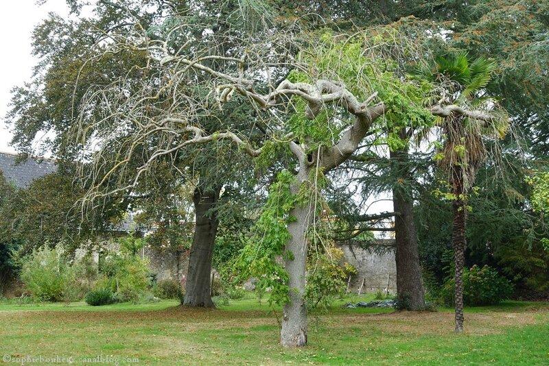 Loquidy arbre