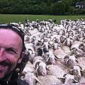 Jénorme fait un selfi brebis (64)