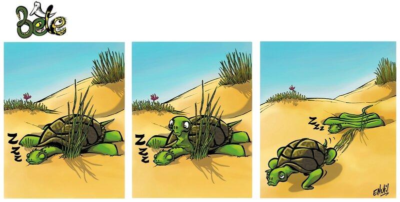 Bête - Une tortue 2 - Enutil