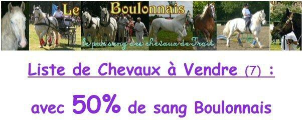 Bannière Liste de Chevaux avec 50% de sang Boulonnais (autres qu'Arabo) A Vendre