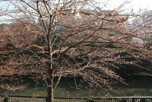 JapanDSC_2903_